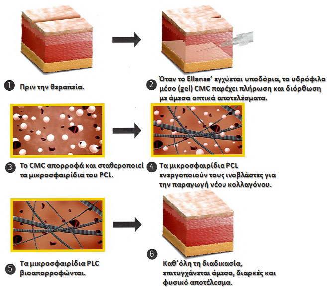 Κολλαγονογένεση  3