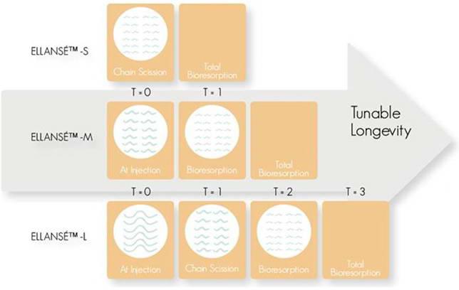 Κολλαγονογένεση  9