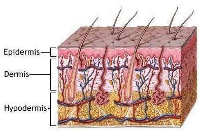 Μεταμόσχευση Μαλλιών 3
