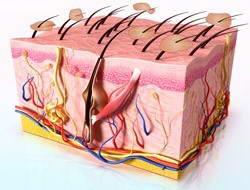 Σμηγματορροϊκή Δερματίτιδα 1